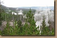 Geyser Basin in Yellowstone