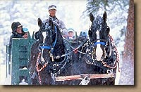 Horse-drawn sleigh rides at Lone Mountain Ranch